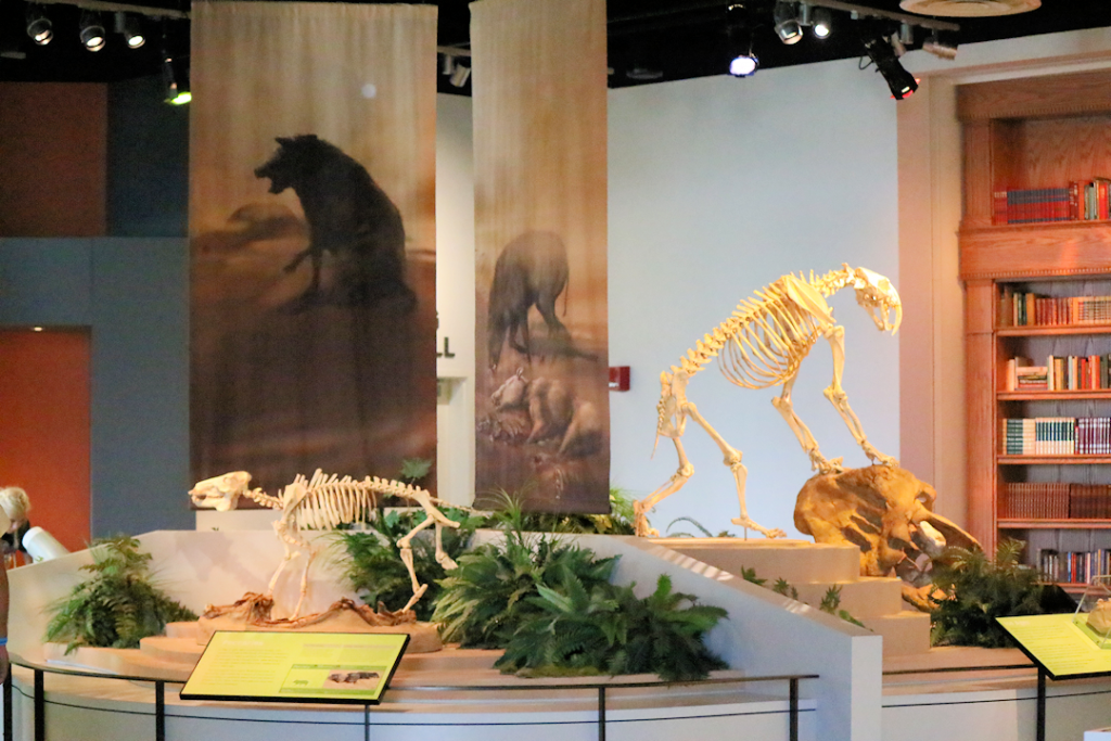 Discovery Park Exhibits